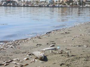 Peces muertos en mar menor España