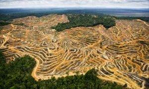 cómo plantar un árbol para ayudar a la deforestación de una manera pequeña