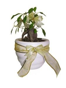 cómo plantar un árbol como regalo