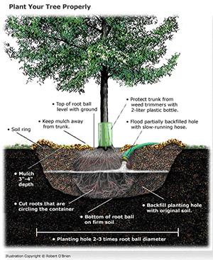 cómo plantar un diagrama de árbol instrucciones