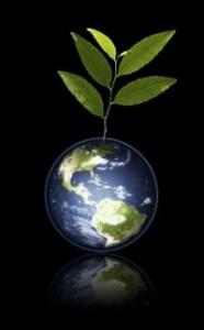cómo plantar un árbol para salvar la tierra