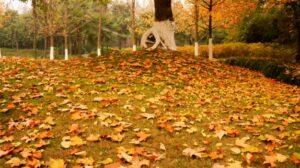 hojas secas en el suelo
