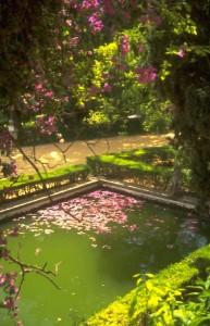 repelente de mosquitos ecológico: evita el agua estancada