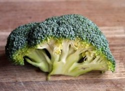 brócoli fresco crudo