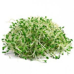 brotes de alfalfa alimentos crudos