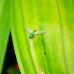 repelente de mosquitos ecológico para detener las picaduras de mosquitos