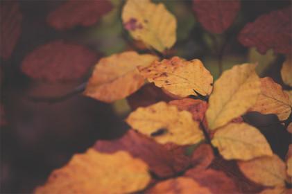 sopladores de hojas para hojas en otoño otoño