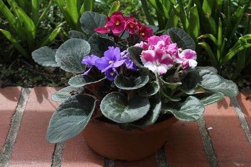 Una de las hermosas plantas de interior.