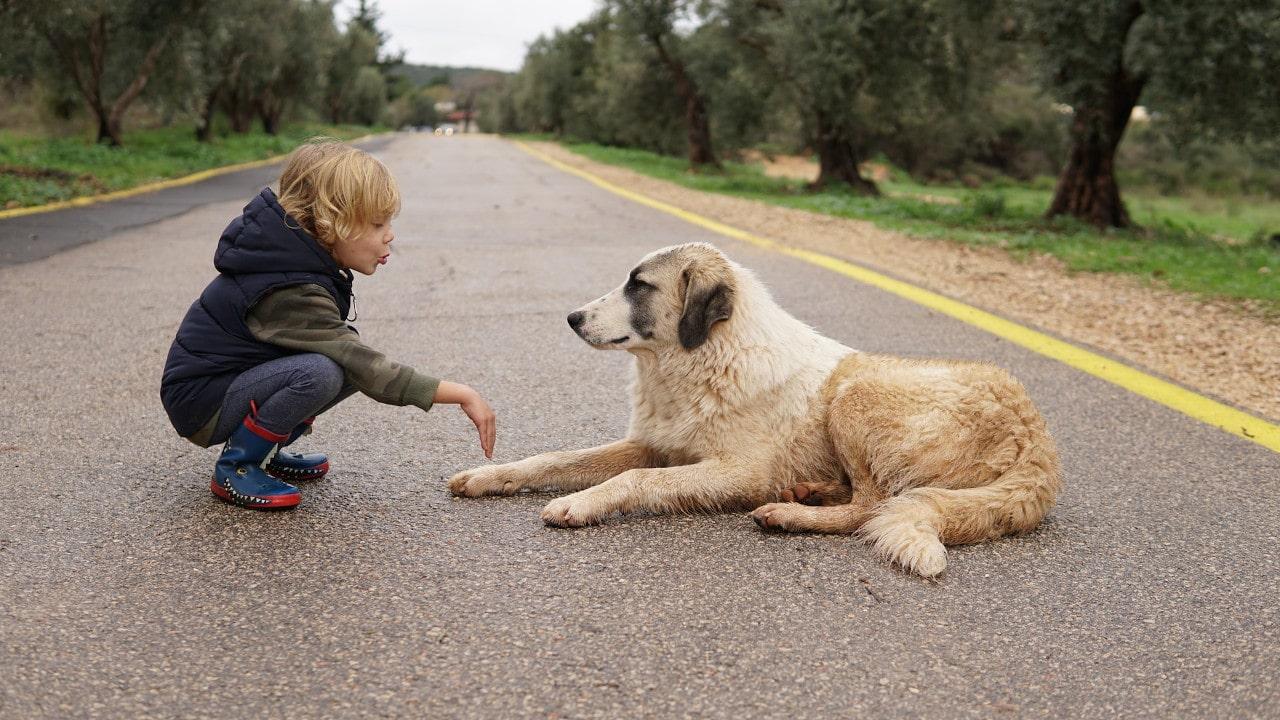 Dueño de perro ecológico