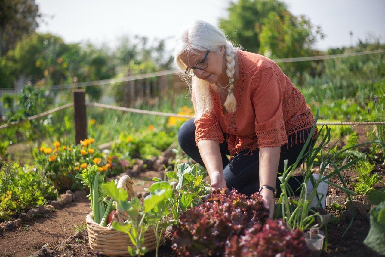 compre alimentos orgánicos o cultive los suyos propios